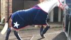 polar fleece horse rug